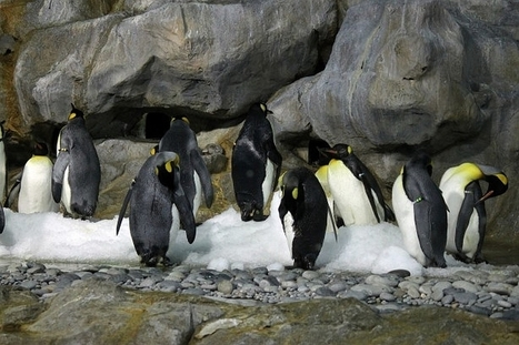 Emperor penguins declining, but how is climate change affecting other arctic ... - Tech Times | Arctic climate change issues | Scoop.it