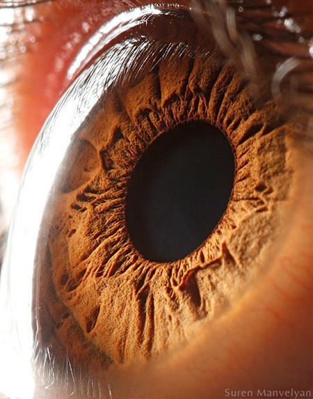 Amazing Photos of Human Eyes | Amazing Science | Scoop.it