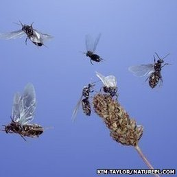 UK's flying ant swarms counted | Social Foraging | Scoop.it