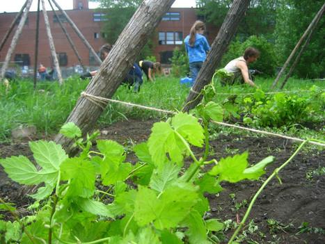 5 manières astucieuses de jardiner en ville | Nature en Ville | Scoop.it
