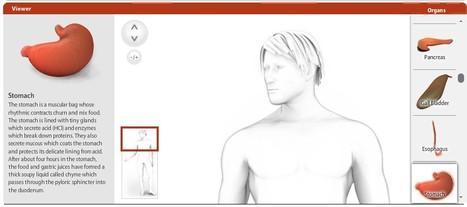 Build a Body: Un site pour connaitre plus sur son corps | Geeks | Scoop.it