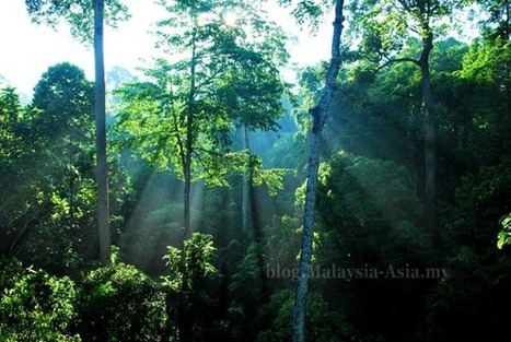 Sabah Rainforest Picture ~ Malaysia Asia | Green Living | Scoop.it