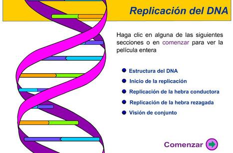 REPLICACIÓN DEL DNA, TRANSCRIPCIÓN Y TRADUCCIÓN | Biología al día | Scoop.it