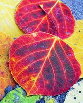color en el otoño | color en la publicidad | Scoop.it