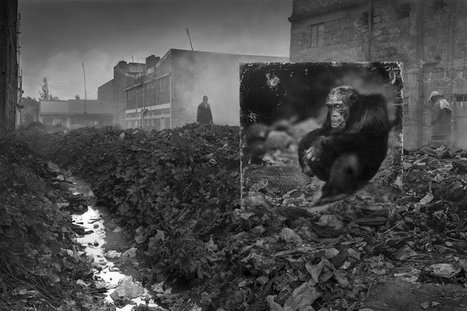 Photographer Shoots Life-Size Animal Prints in Destroyed Habitats   Organic Pathos   Scoop.it