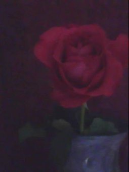 The rose supposes... | Poetry for inspiration | Scoop.it