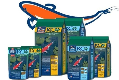 Feeding Koi in the winter   Pond Talk   Scoop.it