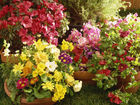 Arrange Containers to Maximize Landscape : Outdoors : Home & Garden Television | Affordable Sprinkler & Landscape | Scoop.it