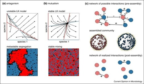 Microbial interactions and community assembly at microscales - Current Opinion in Microbiology | Plant-Microbe-Interactions | Scoop.it