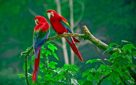 parrots paradise | Hq Wallpapers Fun | hd-wallpaper-fun | Scoop.it
