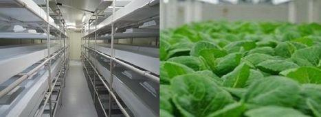 LED光源による完全人工光型の植物工場にてベビーリーフを中心に栽培。施設では知的障がい者・高齢者の支援と雇用創出を目指す(Gファクトリー) | PlantFactory | Scoop.it