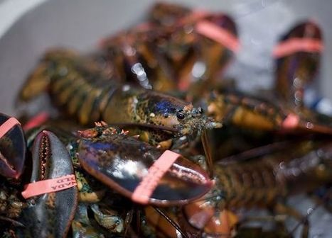 German Couple Free Lobsters from Italian Restaurant | Food for Pets | Scoop.it
