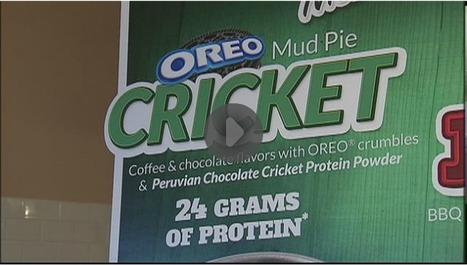 Milkshakes made with crickets | Entomophagy: Edible Insects and the Future of Food | Scoop.it