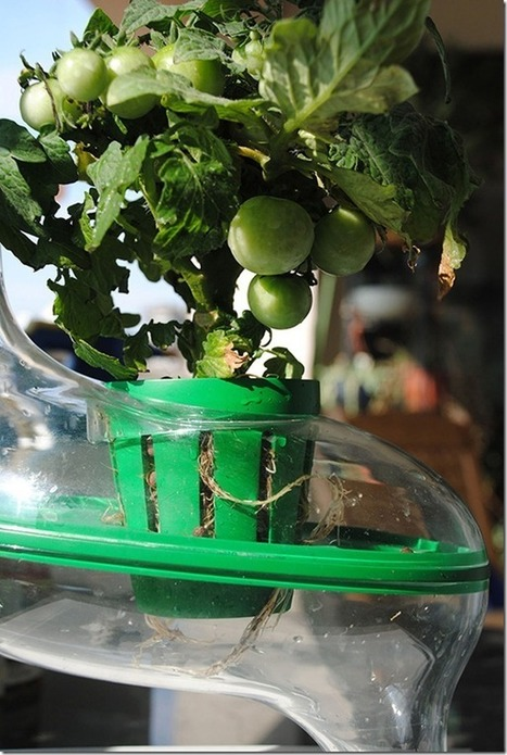 » Concept Hydroponic plant PlanTree Future technology | Things I Like | Scoop.it