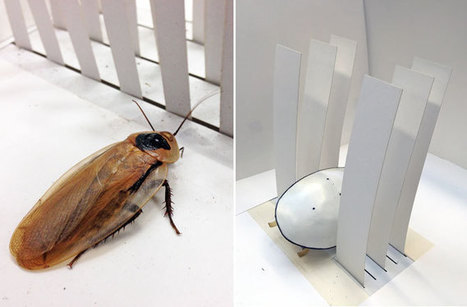 Cockroach Robot Squeezes Through Cracks | Biomimicry | Scoop.it