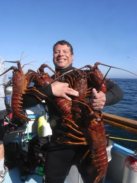 Why We Don't Eat California Spiny Lobsters (Even Though They Taste Better) | ScubaObsessed | Scoop.it