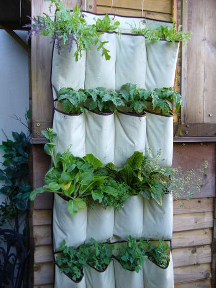 5 diy ideas for growing veggies without a yard | upcycled | Scoop.it