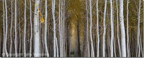 10 Creative Landscape Photography Tips | Photography Tips & Tutorials | Scoop.it