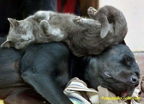 Animali che dormono ovunque (20 foto)   ANIMALI   Scoop.it