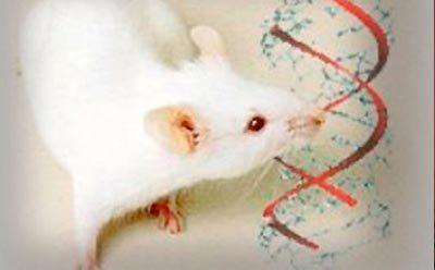 Una proteína neuronal podría evitar la epilepsia | Bioquimica | Scoop.it