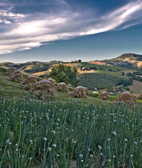 Travel to The Marche Region of Italy | Hideaway Le Marche | Scoop.it