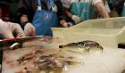 Le Fugu revient dans tous les restaurants | Cook&post | Scoop.it