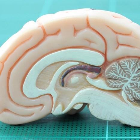 Neuroscientist Molly Crockett: how to spot 'neurobollocks' (Wired UK) | Mind (un?)fitting the future | Scoop.it