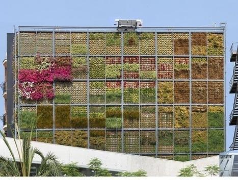Jardín vertical en San Vicente del Raspeig | Jardines Verticales y azoteas verdes. | Scoop.it
