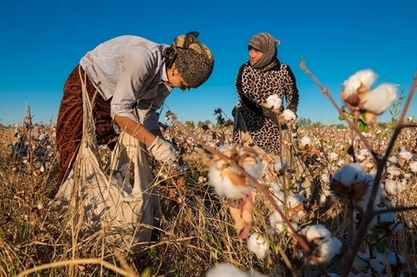 Forced Labor, Child Labor Still Heavily Tied to Uzbek Cotton and Fast Fashion | Market information | Scoop.it