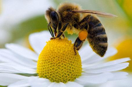 Les abeilles, témoins du bon état de notre environnement, disparaissent massivement B3F_w3VgdUlxPVKMbguZ3zl72eJkfbmt4t8yenImKBVaiQDB_Rd1H6kmuBWtceBJ