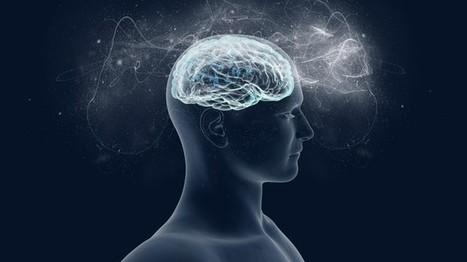 Comment le cerveau élabore la conscience   Neurosciences   Scoop.it