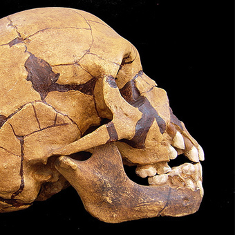 The Downside to Neanderthal DNA | DNA & RNA Research | Scoop.it