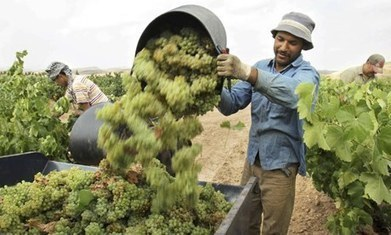 Europe's wine makers seal the bottle on a very good year - The Guardian | World Wine Stories | Scoop.it
