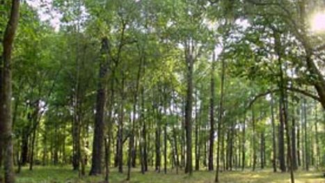 L'agroforesterie représente un dixième des terres agricoles de l'UE | Biodiversité | Scoop.it