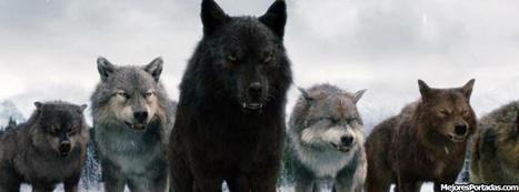 #Liderazgo ¡¡Seamos como los lobos!! por @SherpaPersonal | Orientar | Scoop.it