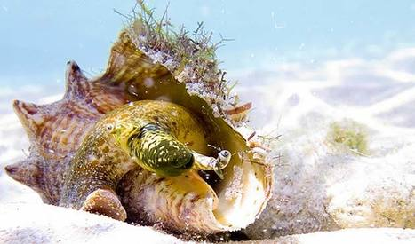 Antigua's Deadliest Catch | ScubaObsessed | Scoop.it