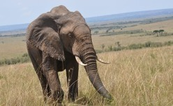 Tanzania: Manhunt Closes On Poachers Behind Chopper Shooting | Wildlife Trafficking: Who Does it? Allows it? | Scoop.it