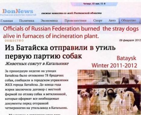 Op-Ed: State-sponsored cruelty to animals in the Russian Federation Special - DigitalJournal.com | Animals R Us | Scoop.it