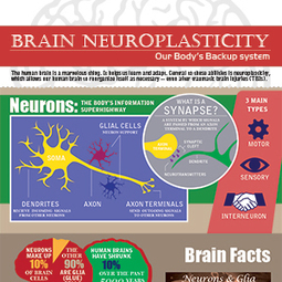 Neuroplasticity: The Remarkable Ability of Our Brain to Adapt | TBI | Scoop.it