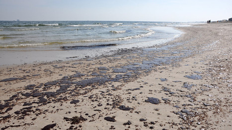 Wanna know what's happened to the Gulf Coast since the #BP #spill? Read this blog, now #death #pollution | Messenger for mother Earth | Scoop.it