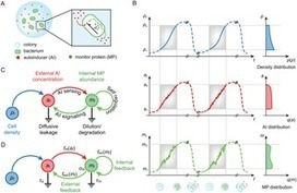 Optimal Census by Quorum Sensing   Bounded Rationality and Beyond   Scoop.it
