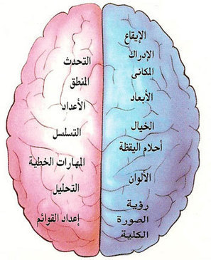 Research Study Says: Arabic Makes Your Brain Work More! | Arabic Language Blog | student centric education | Scoop.it