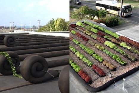 Honolulu's first urban rooftop farm - HONOLULUMagazine.com | Vertical Farm - Food Factory | Scoop.it