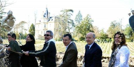 Gironde : à Pessac, un bateau signé Starck au pied des vignes - Sud Ouest | Le vin quotidien | Scoop.it