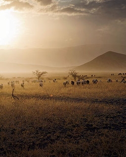 The Fight Over the Serengeti Highway - Articles - Departures | Saving the Big Animals | Scoop.it