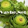 vaybe.net