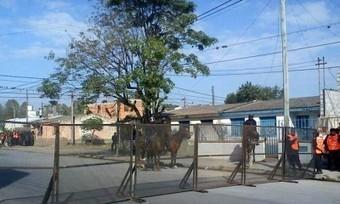 Argentina / Reprimen a vecinos que rechazan una planta transformadora en Jujuy -   MOVUS   Scoop.it