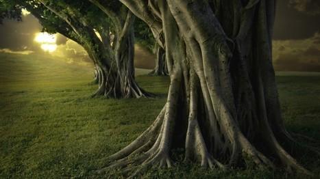 La Vida en los Bosques | Agua | Scoop.it