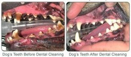 Dogs and Cats Need Veterinary Dental Cleanings in Broken Arrow to Remain Healthy | Broken Arrow Veterinarian | Broken Arrow Veterinarians | Scoop.it