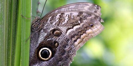 La moitié des papillons des prairies ont disparu ces vingt dernières années en Europe   ecology hydrobiology   Scoop.it